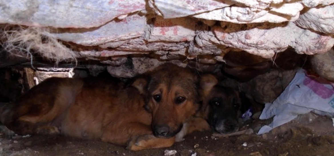 MASSIVE RESCUE part 3 – Salamanca hoarder